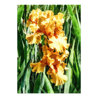 Iris célticos de la gloria