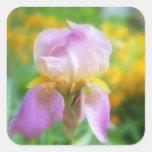 Iris colorido de la primavera calcomanías cuadradass personalizadas