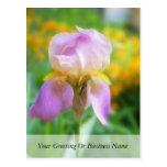 Iris colorido de la primavera tarjeta postal