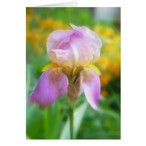Iris colorido de la primavera tarjetas