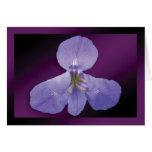 """Iris"" - Dark Purple Background GC Card"