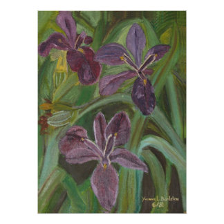 Iris de color de malva del LA Póster