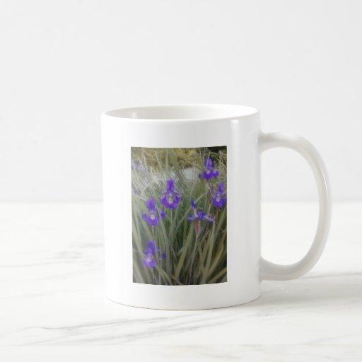 Iris de la púrpura de la taza de café