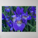 Iris de madera póster