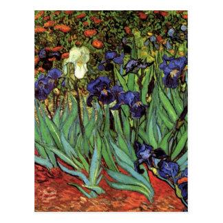 Iris de Van Gogh, arte del impresionismo del poste Postal