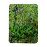 Iris de Van Gogh, arte del jardín del impresionism Imanes Rectangulares