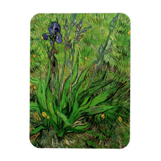 Iris de Van Gogh arte del jardín del impresionism Imanes Rectangulares