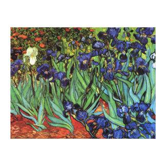 Iris de Van Gogh, bella arte del jardín del