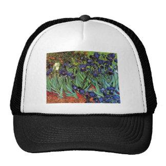 Iris de Van Gogh, bella arte del jardín del Gorras