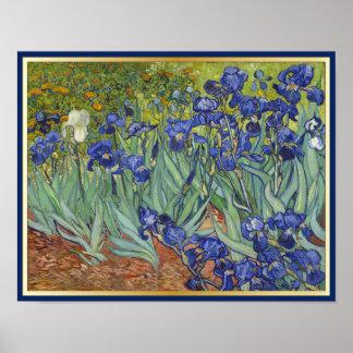 Iris de Van Gogh Posters