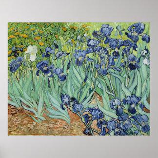 Iris de Vincent van Gogh Posters