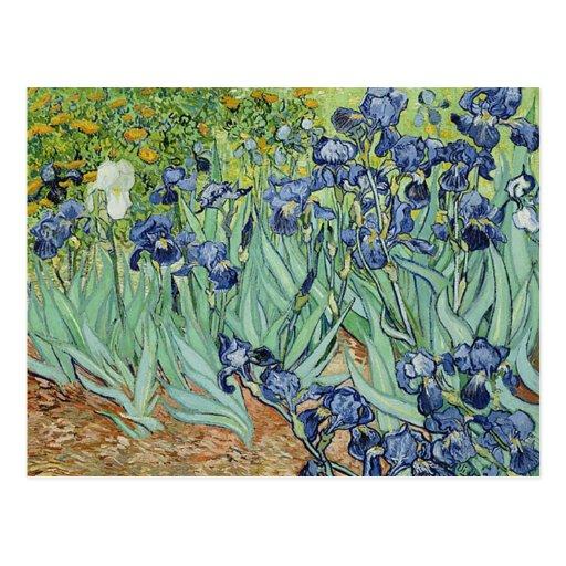 Iris de Vincent van Gogh Postales