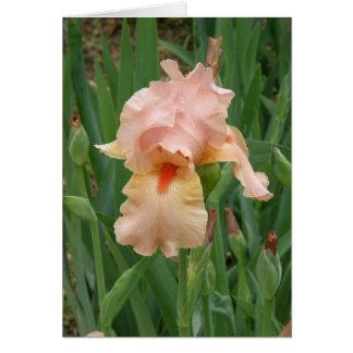 Iris del melocotón felicitaciones