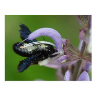 Iris del Xylocopa Tarjetas Postales