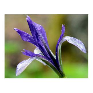 Iris después de la lluvia postales
