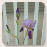 Iris Drink Coasters