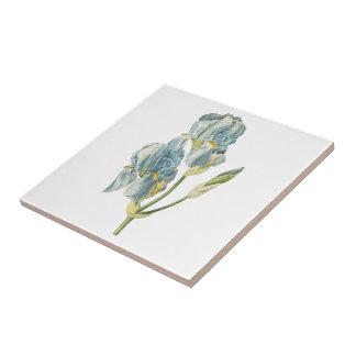 iris dulce (pallida del iris) por Redouté Teja Cerámica