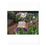 Iris en el día postales