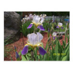 Iris en el día tarjeta postal