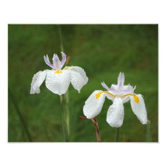 Iris en la lluvia fotografía