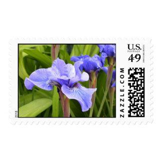 Iris Floral Postage Stamp