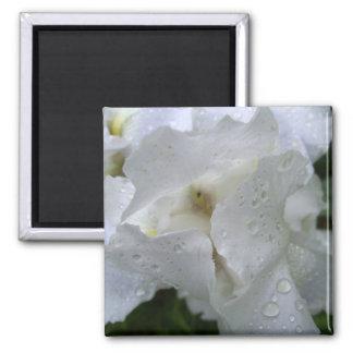 Iris flower magnet