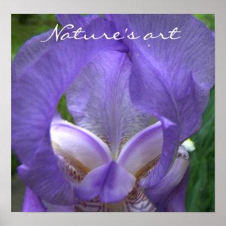 Iris Flower Photograph Poster