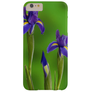 Iris Flowers Barely There iPhone 6 Plus Case