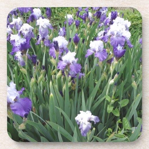Iris flowers beverage coaster