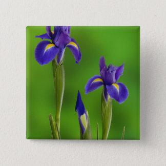 Iris Flowers Button