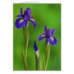 Iris Flowers Cards