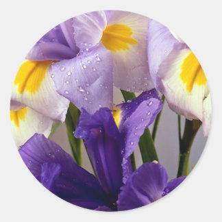 Iris flowers classic round sticker