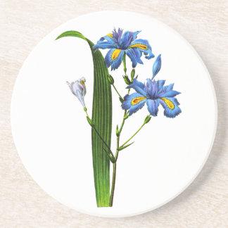Iris Frangee by Joseph Pierre Redoute Coaster