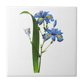 Iris Frangee by Joseph Pierre Redoute Ceramic Tiles