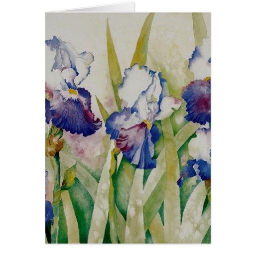 iris garden 2 cards