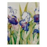 iris garden 2 post card