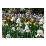 Iris Garden- Happy Birthday! Card