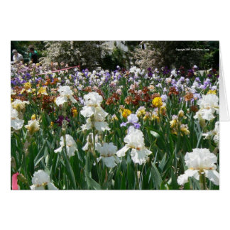 Iris Garden- Happy Birthday! Card