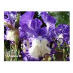 Iris Garden Post card Enjoy the Sunshine! Irises