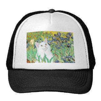 Iris - gato blanco gorras