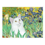Iris - gato blanco postal