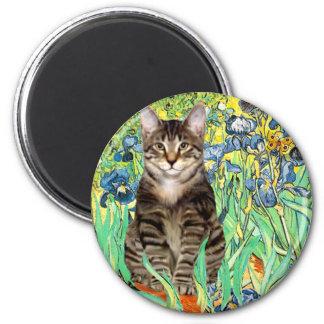 Iris - gato de tigre del Tabby 30 Imán Redondo 5 Cm