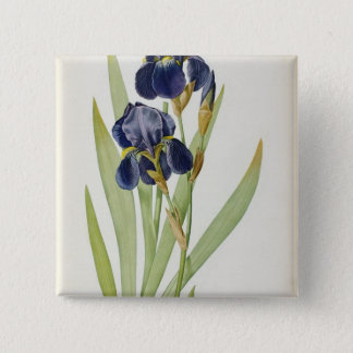 Iris Germanica, from `Les Liliacees', 1805 Pinback Button