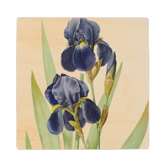 Iris Germanica, from `Les Liliacees', 1805 Wood Coaster