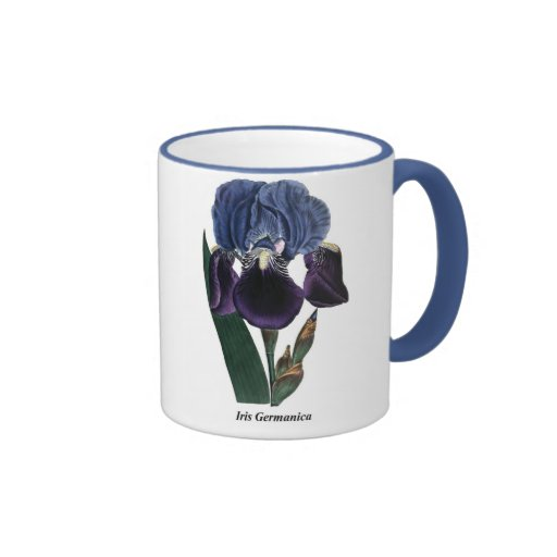 Iris Germanica Taza