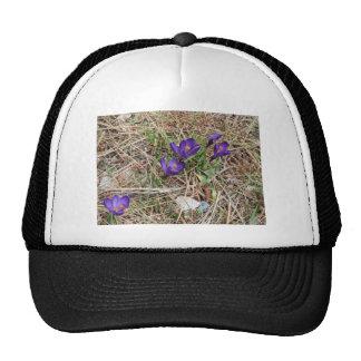 Iris hermoso 2 de la montaña púrpura gorro de camionero