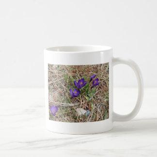 Iris hermoso 2 de la montaña púrpura taza