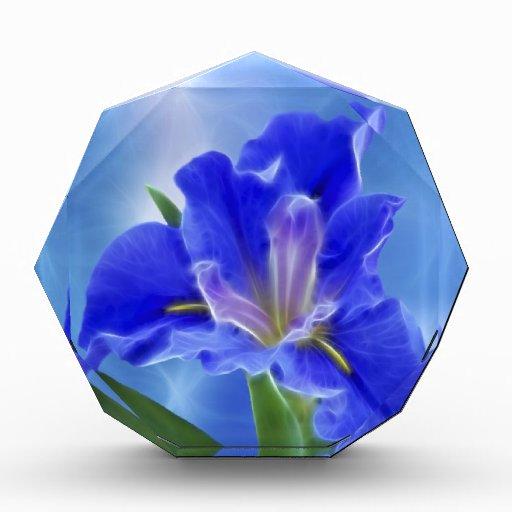 Iris hermoso del fractal y su significado