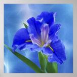 Iris hermoso del fractal y su significado posters