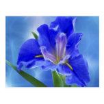 Iris hermoso del fractal y su significado tarjetas postales